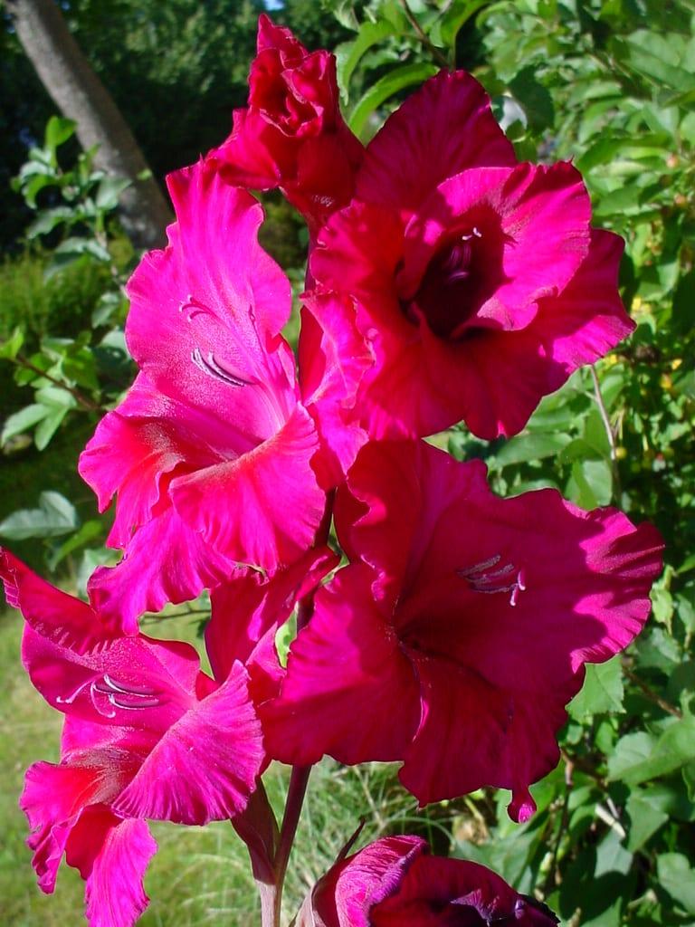 Great Eccleston & District Gardening Club