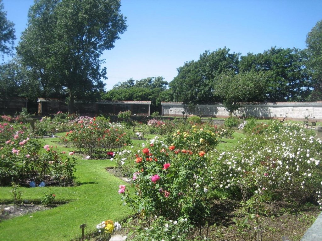 Rose garden at Carleton Crematorium, photo Denys Barber