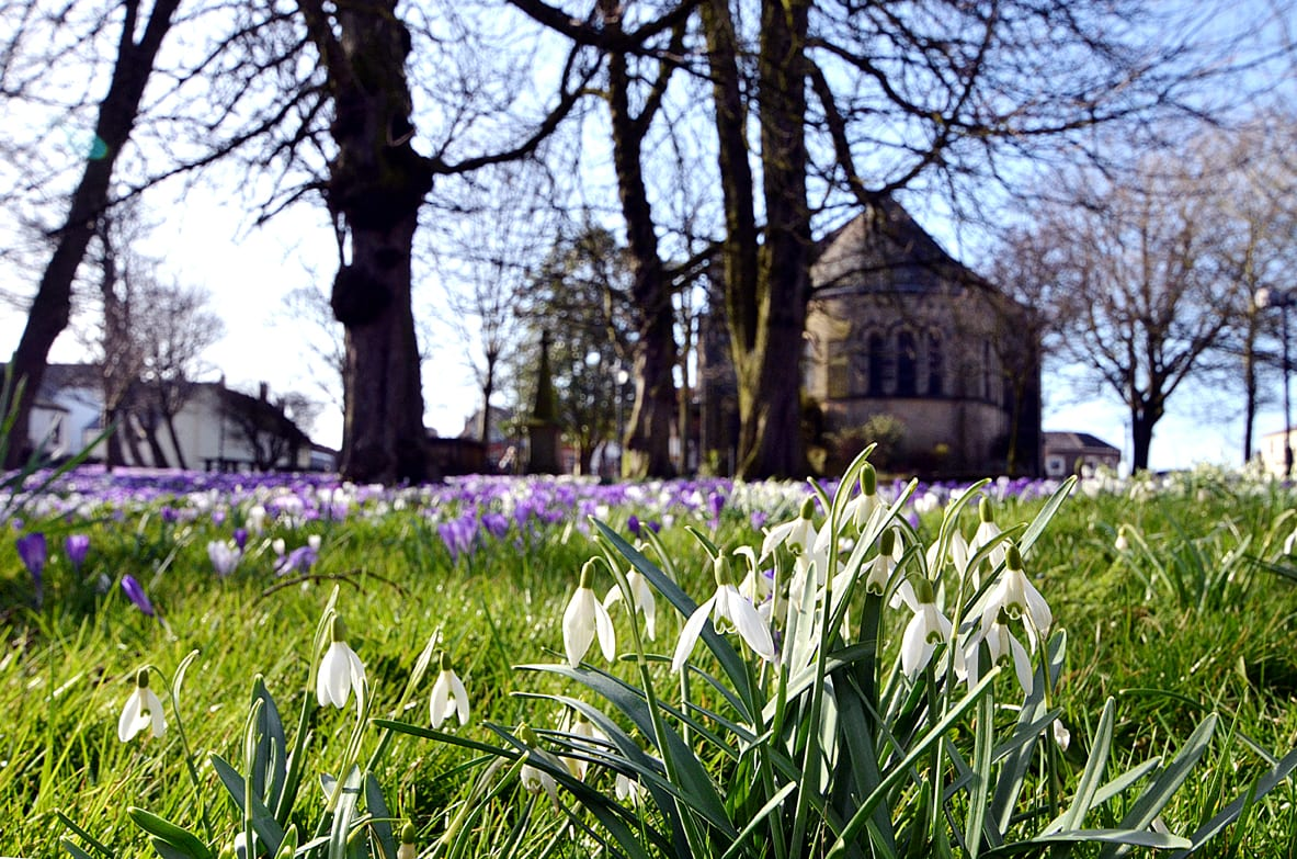 Crocus and snowdrops at St Chads Church Poulton