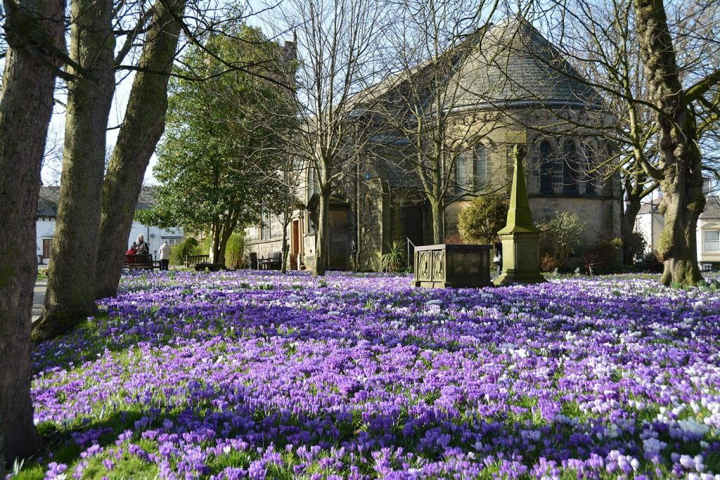 Crocus at St Chads Church, Poulton
